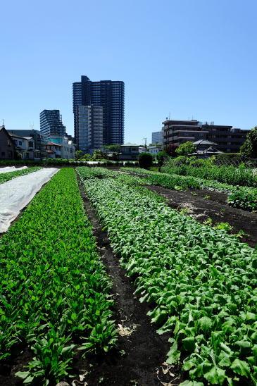 上鶴間本町の畑