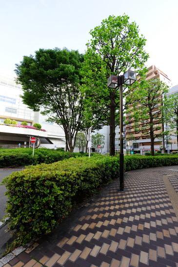 相模大野駅南口の歩道