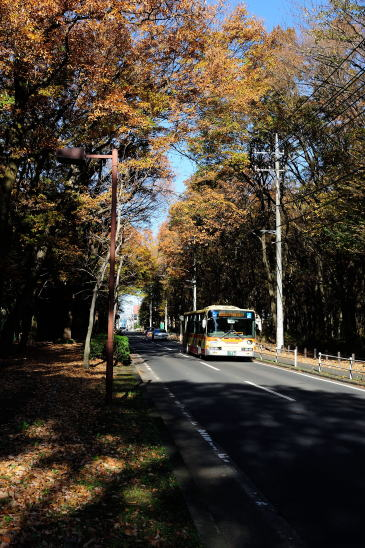 色づいた「木もれびの森」をゆく神奈中バス