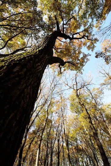 色づいた森を見上げる