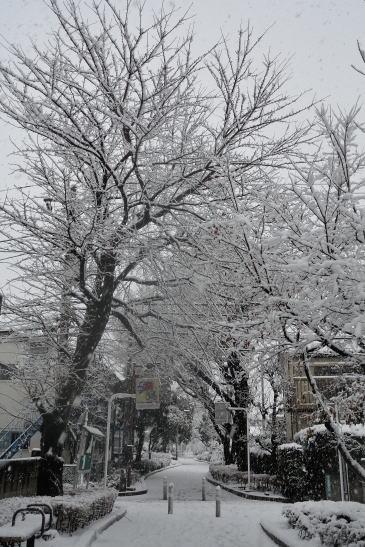 相模緑道緑地、雪降る日