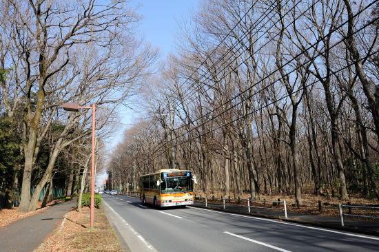 早春のバス通り