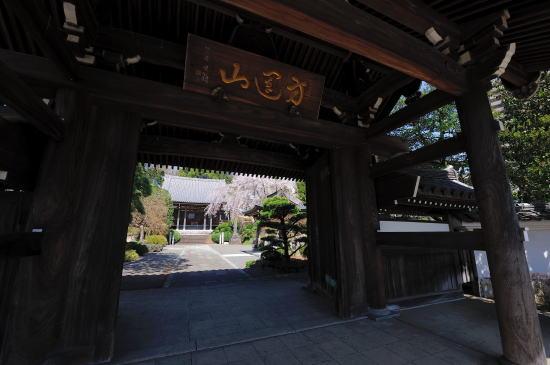 青柳寺のしだれ桜