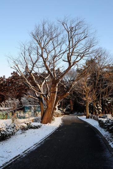 森のいりぐち~雪の朝
