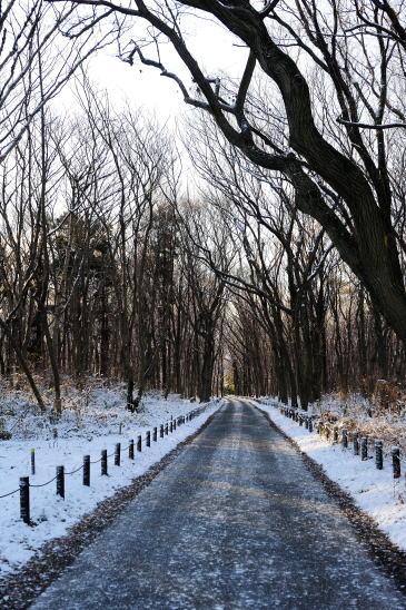 うっすら雪の道