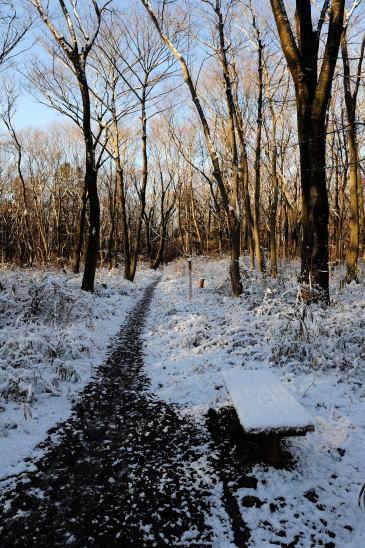 雪の朝、木もれびの森をゆく