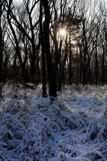 木もれびの森、雪の朝