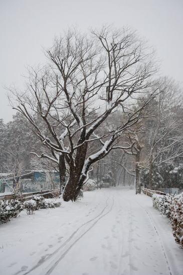 森のいりぐち~雪の降る日