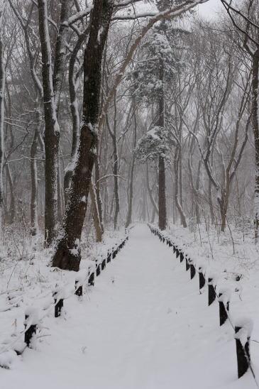 雪降る日、木もれびの森をゆく