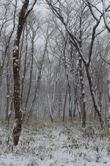 雪降る日、木もれびの森にて