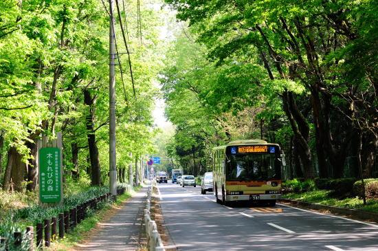新緑の中を行く神奈中バス