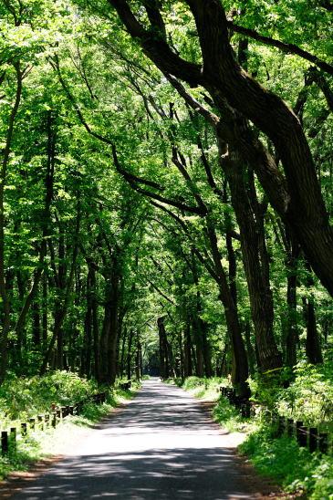 緑深まる道