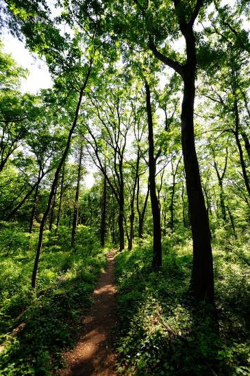 初夏の森をゆく