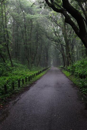 小雨の煙る道