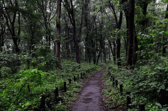 小雨の降る木もれびの森