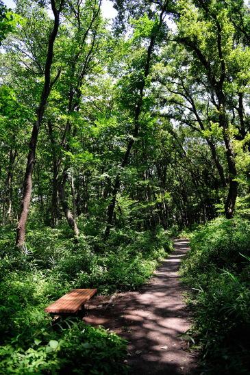 木もれびの森を散歩