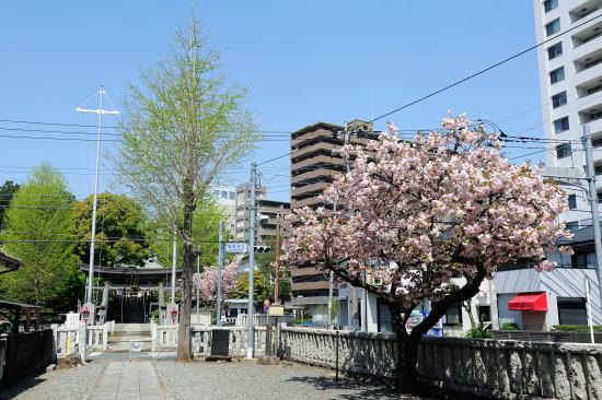 鹿島神社 参道