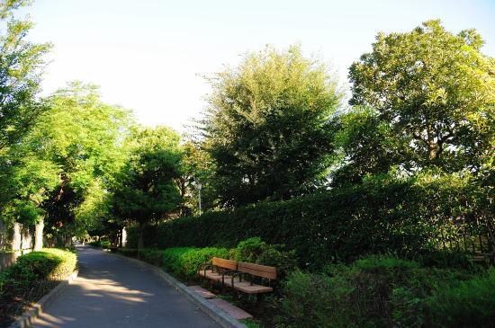 朝の相模緑道緑地