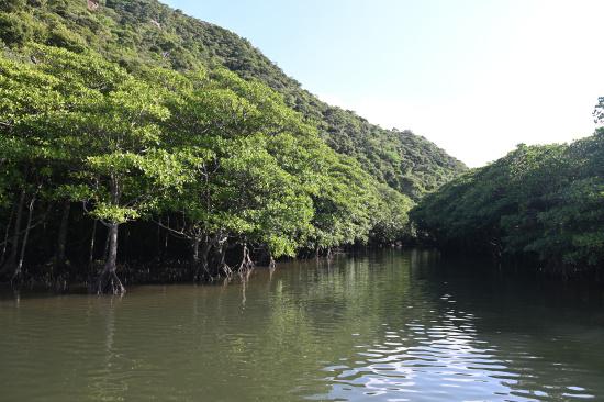 浦内川をクルーズ