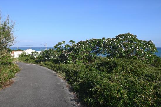 コーラルビーチへの道