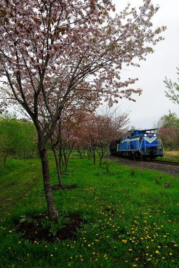 春爛漫の春採湖畔にて