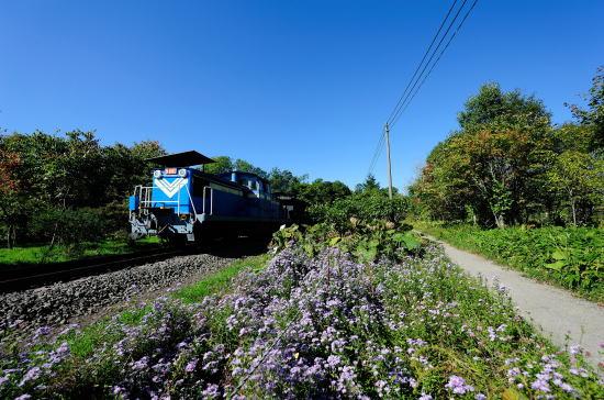 ユウゼンギクと石炭列車