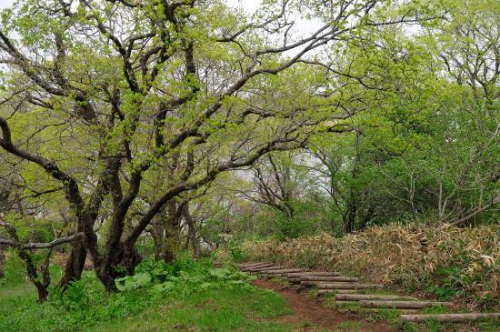 春採湖遊歩道にて