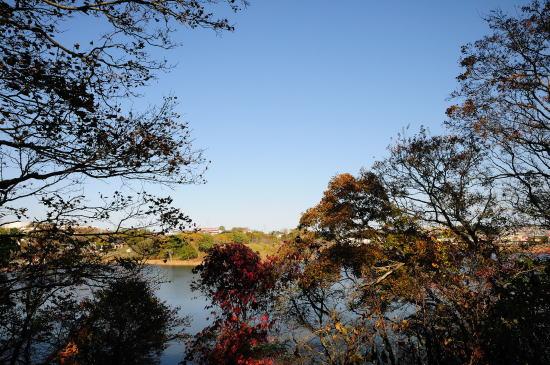 樹間から望む春採湖と秋空