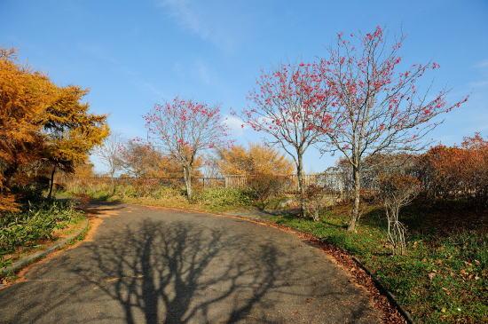 秋色の春採湖遊歩道