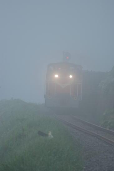 霧の釧路埼をゆく