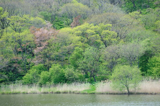 萌ゆる春採湖畔