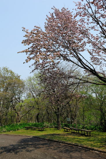 春採公園にて