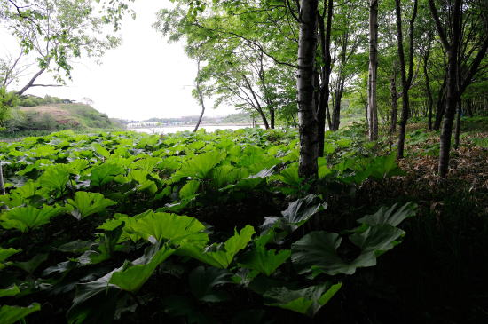 春採湖畔にて