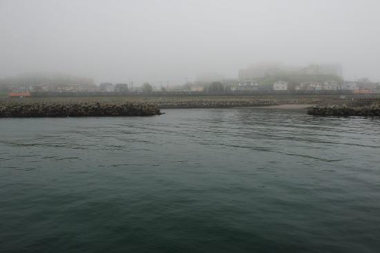 霧の日、千代ノ浦海岸をゆく~赤と赤の機関車