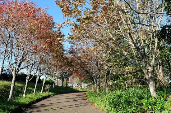 春採湖遊歩道 紅葉のナナカマド