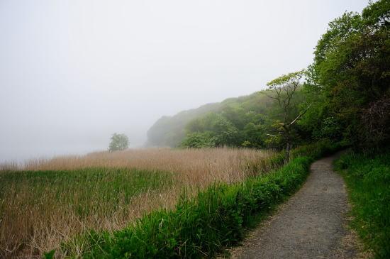 霧の日、春採湖畔