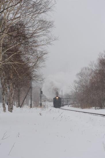 塘路駅の白樺並木をゆく「SL冬の湿原号」ヘッドマーク無