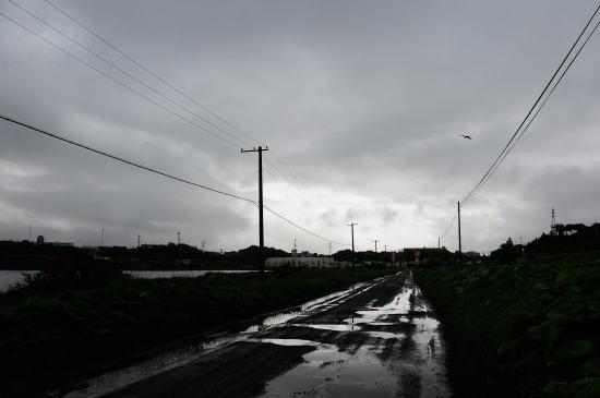 雨の日の春採湖遊歩道