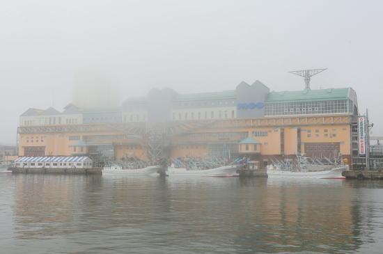 霧の日のMOO