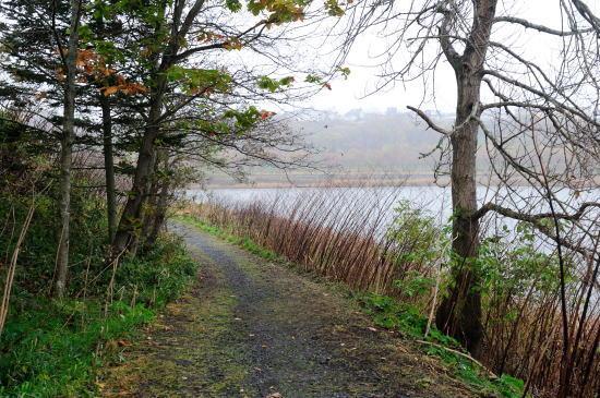 湖畔に続く道