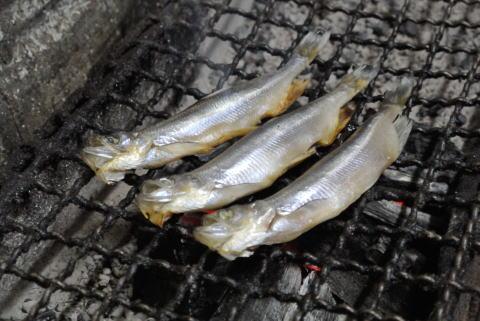 釧路産のししゃもの炭火焼き