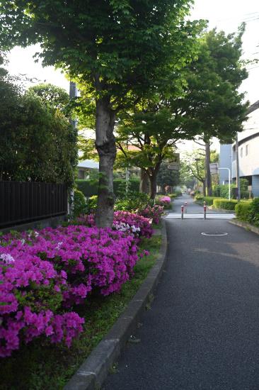 緑道緑地の朝