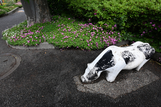 緑道緑地の牛